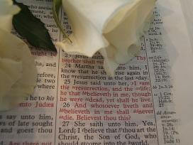 Biblia rosa blanca